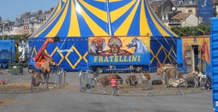 Cirque en salle ou sous chapiteau