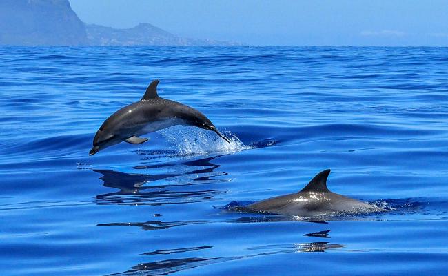 Nager avec les dauphins en Méditerranée : idée de voyage pour le C.E.