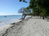 Voyage groupe en Guadeloupe ou Martinique pour CSE : conseils et devis