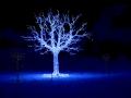 Photographe pour votre arbre de Noël et fête de fin d'année