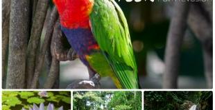 Guadeloupe Eco Tour