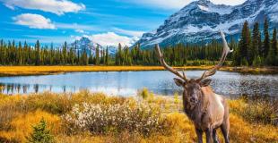 Autotour au Canada pour le comité d'entreprise