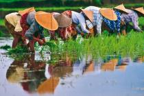 Vietnam Rizières